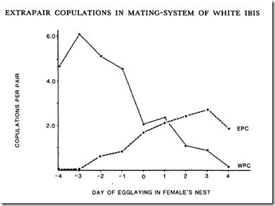 extra-pair-copulation