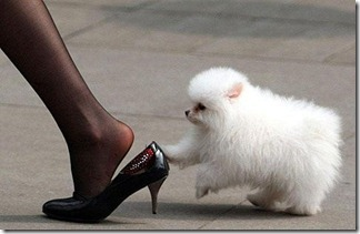 heels,animal,cute,black,dog,kawaii_thumb